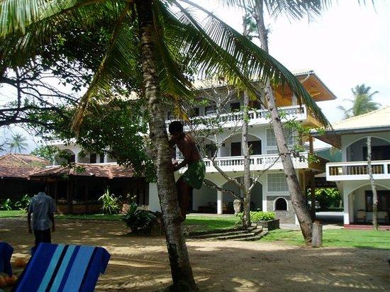 Sri Gemunu Beach Resort: Blick vom Strand in den Garten