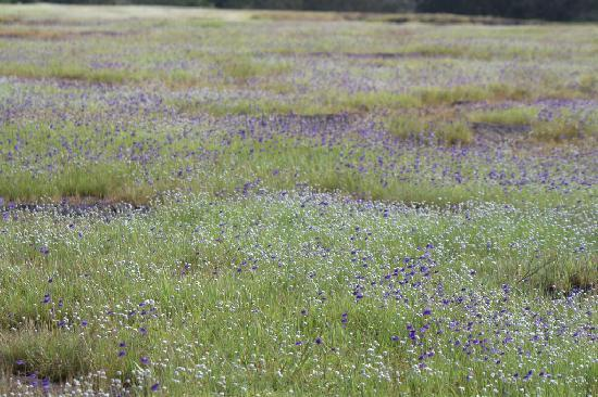 Hotel Sagar Deluxe: Fields of Tuberous Pipeworts and Purple Bladderworts.