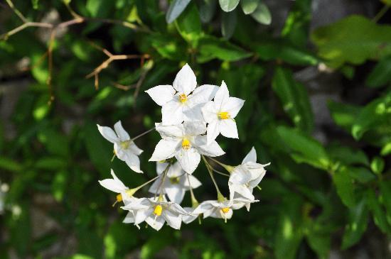 Flowers at Sorrento Lemon Suites
