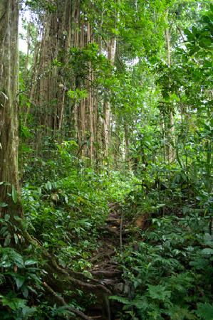 The Wilderness Lodge: Walking through pristine rainforest to Kele river