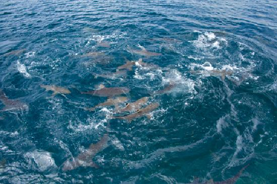 Uepi Island Resort Picture