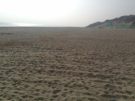 Great Yarmouth, UK: hemsby beach east