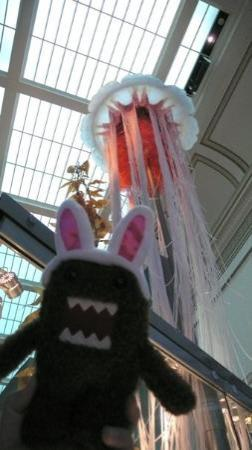 Museum Nasional Sejarah Alam Smithsonian: domo and the jellyfish