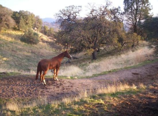 Tehachapi, CA: 2006: This picture of Cal Bred Prince in Stallion Springs is one of my favorites.