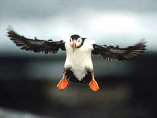 Cap'n Fish's Waterfront Inn: see puffins june thru august