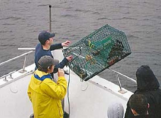 Cap'n Fish's Waterfront Inn: lobster trap hauling monday thru saturday