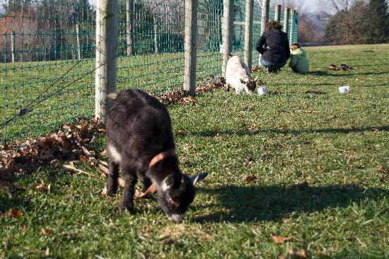 Country Vistas: animals