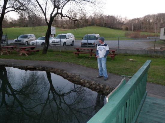 Still fishing picture of english mountain trout farm grill sevierville tripadvisor - Trout farming business family mountains ...