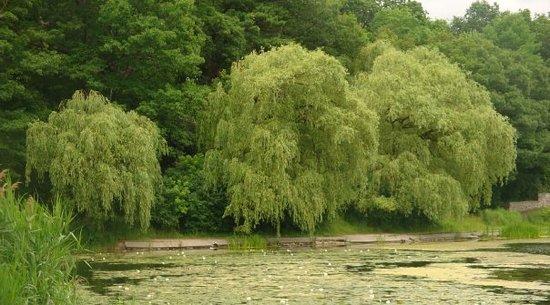 格雷蒂尔湖