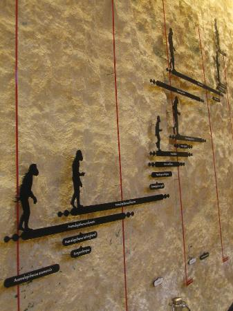 Grottes ornées de la vallée de la Vézère : Musée Nationale de Préhistoire à Les Eyzies