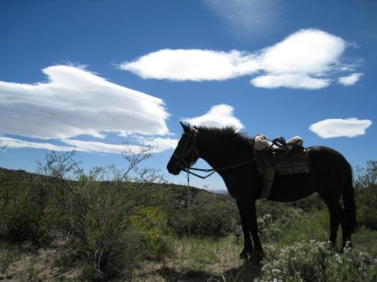 Malargue, Arjantin: My horse, negrito