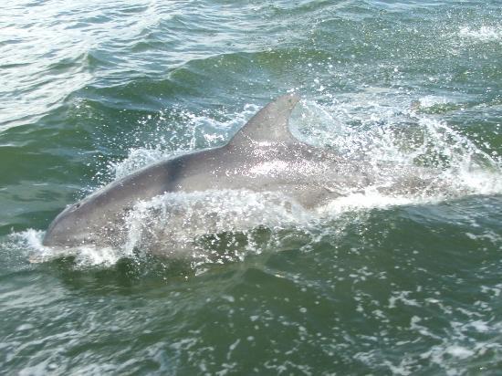 Sanibel Arms Condominiums: Captiva Dolphin Cruise..... So much fun