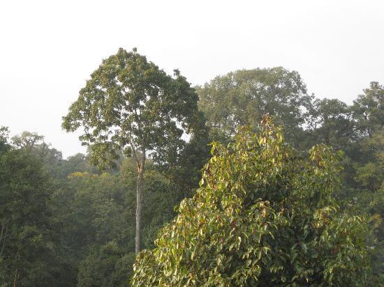 Gokarna Forest Resort: forest setting