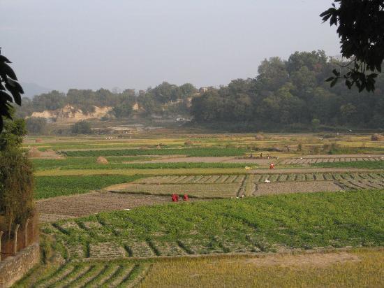 Gokarna Forest Resort : view from forest walk