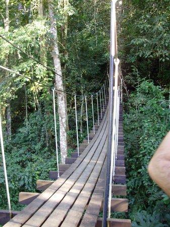 Flight of the Gibbon : bridge in the jungle
