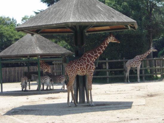 東武動物公園の写真その1