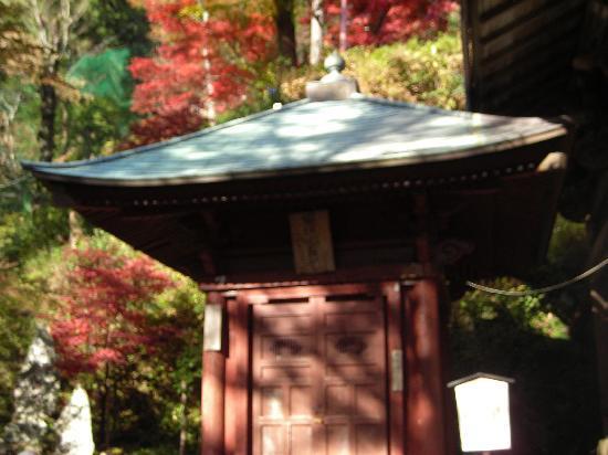 Oyama Cable: 大山ケーブルカー付近の紅葉その2