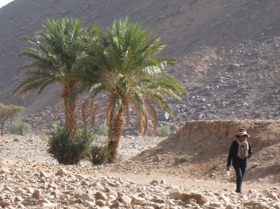 Ibis Agadir : Piscine