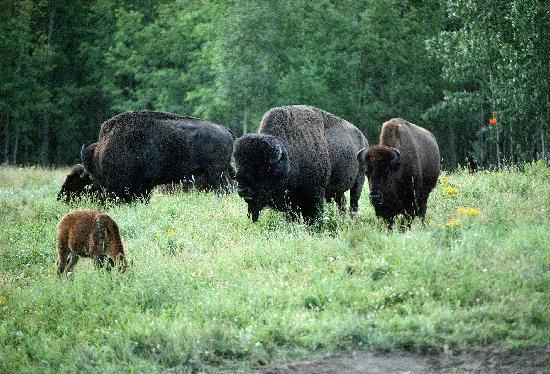 Elk Island Park Tripasdvisor