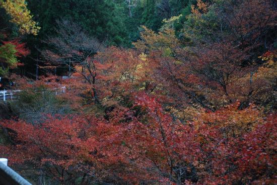 Shirakurakyo Valley: 白倉峡の紅葉