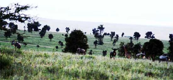 Lukenya Getaway: Herd of Wildebeest