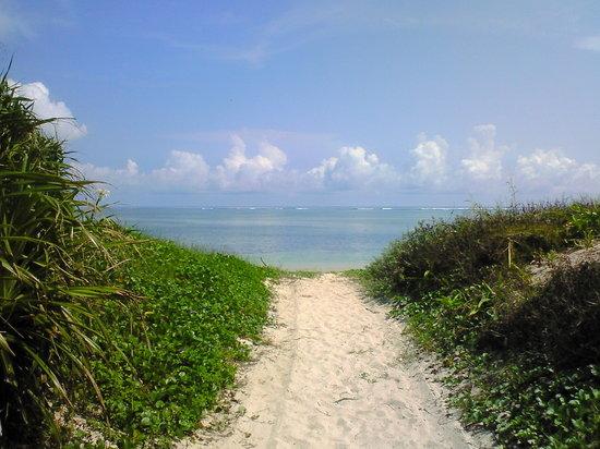 Taramajima Island