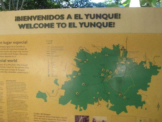 Borincano Tours: El Yunque
