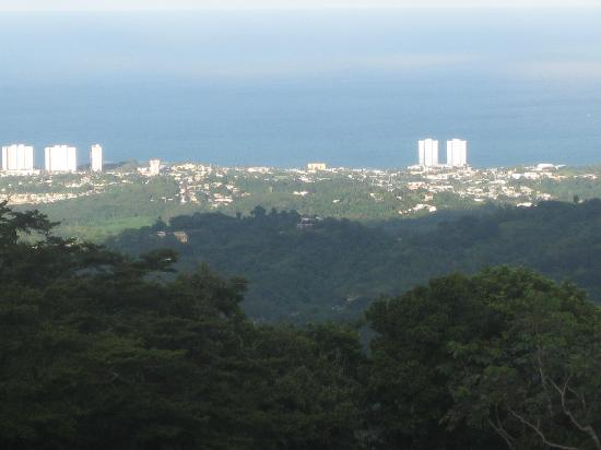 Borincano Tours: view from the lookout tower in El Yunque
