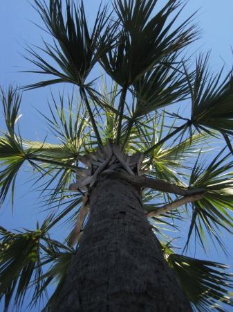 Myrtle Beach Photo Palm Trees
