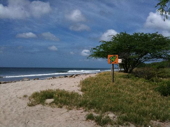 Buena Onda Beach Resort: This is the beach right in front of the hotel.