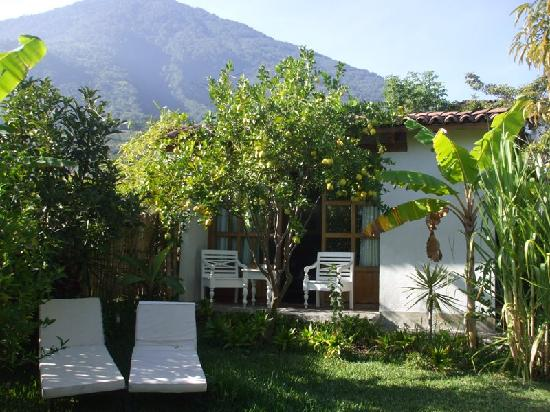 Casa Lobo Bungalows: Make fresh lemonade from the lemon tree at your front door