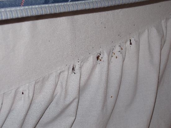 Cambridge Gardens: Bed bugs