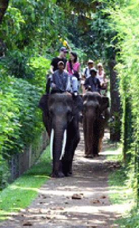 Bali, Indonesien: Elephant park