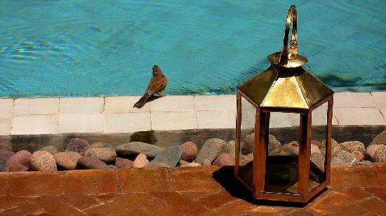 Ryad Najda : coin de piscine