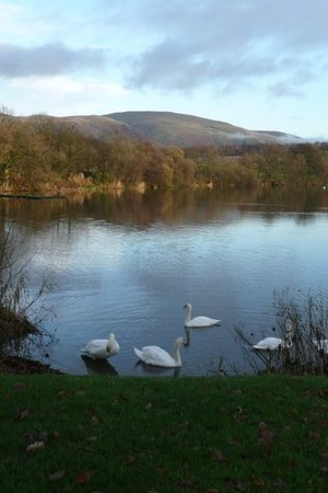 Gartmorn Dam Country Park & Nature Reserve