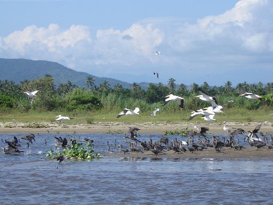 Pie de la Cuesta, México: Aves diversas en la barra de Coyuca
