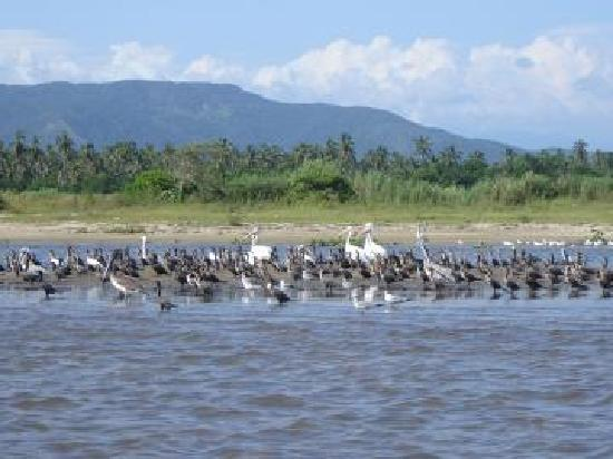 Pie de la Cuesta, Mexico: pelicanos y cormoranes
