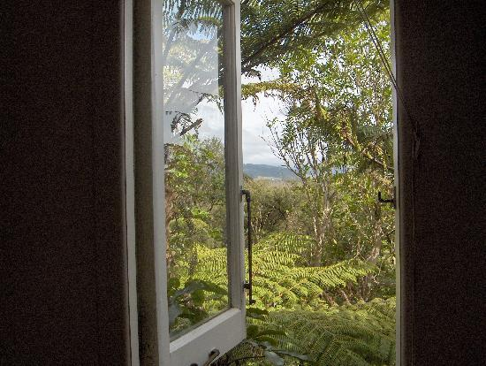 Fern Lodge: The Cabin is surrounded by tree ferns.