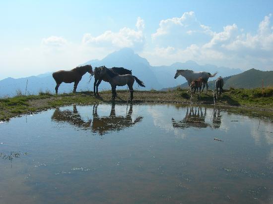 Cavalli a San Fermo. BORNO