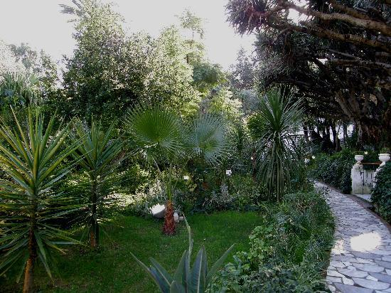 Hotel El-Djazair Ex Saint George: In late december 2008 the paradise garden of Hotel El-Djazair