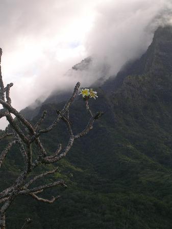 Pension Kanahau : fleur de Marquises