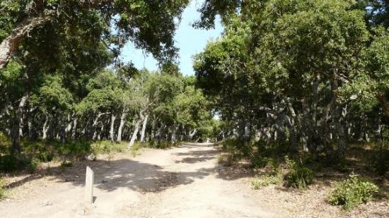 Porticcio, Prancis: Foret de chenes lieges
