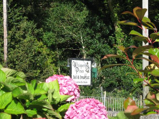 Whispering Pines B&B: Their sign