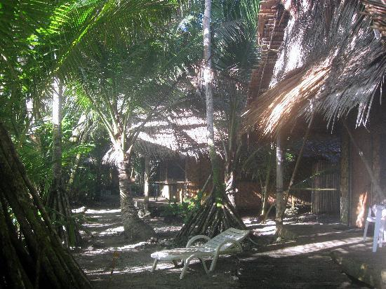 Kosrae Village Ecolodge & Dive Resort: On the grounds of KVR-sun shining through the palms