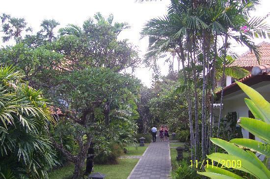 Puri Raja: Beautiful Tree lined pathway