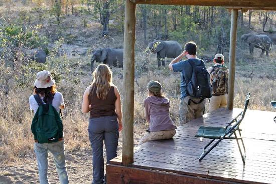 Shindzela Tented Safari Camp, Timbavati Reserve Elephants from Tent 6