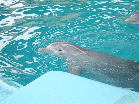 Delfines Hotel & Convention Center: Los delfines si están!!!