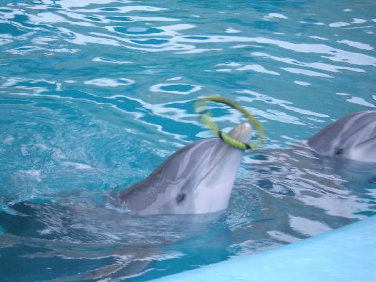 Delfines Hotel & Convention Center: El juego de los delfines
