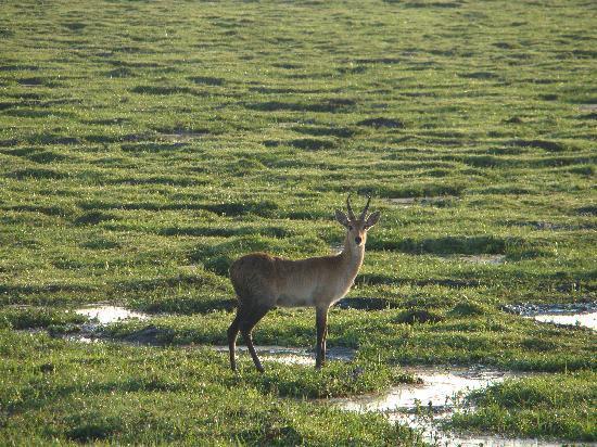 Национальный парк Амбосели, Кения: Swamp