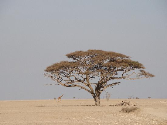 Amboseli Eco-system, Kenya: Out-of_Africa